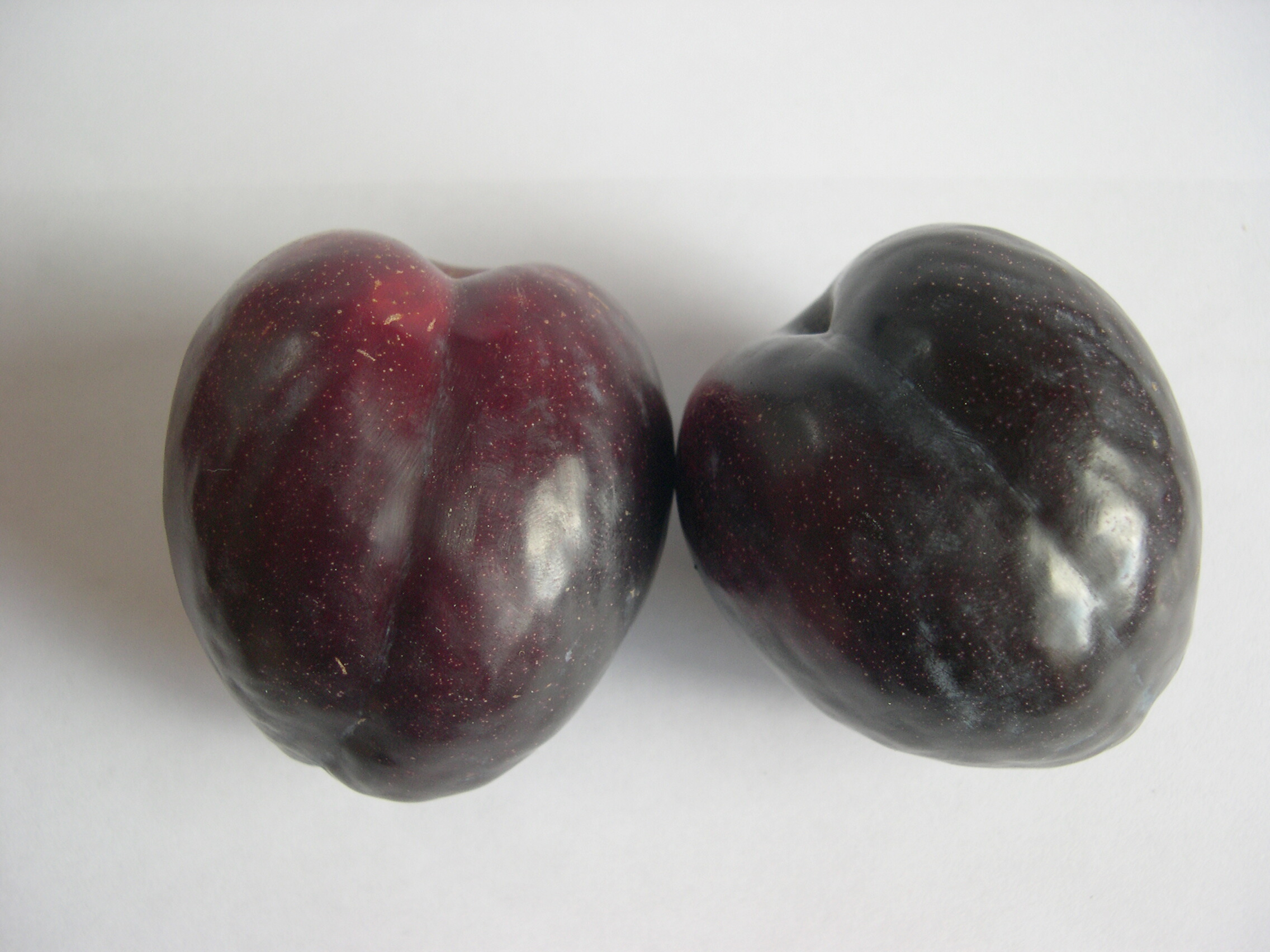 PLUM DOUBLE - Santa Rosa & Black Doris