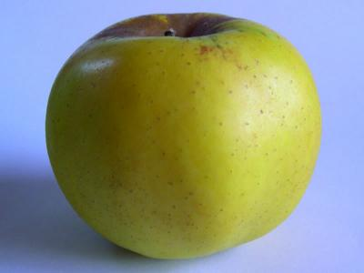 APPLE Freyberg