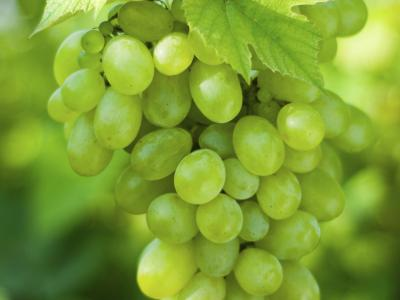 White / Green Grapes