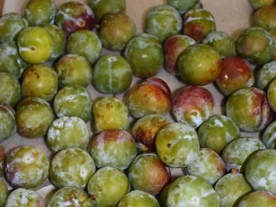 PLUM English Greengage