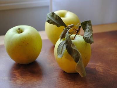APPLE Golden Delicious