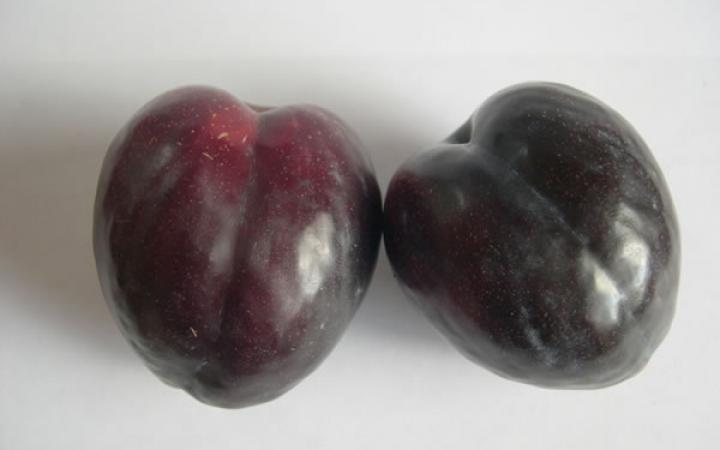 Fruit Trees / Plums / Black Doris