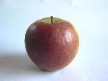 APPLE Tydeman's Late Orange