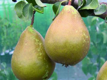 PEAR Conference