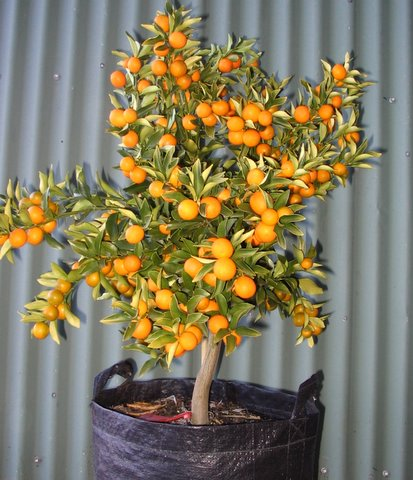 Waimea Nurseries Produce A Huge Range Of Fruit Trees