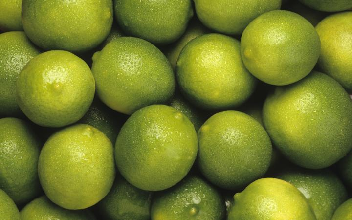 Lime bearss