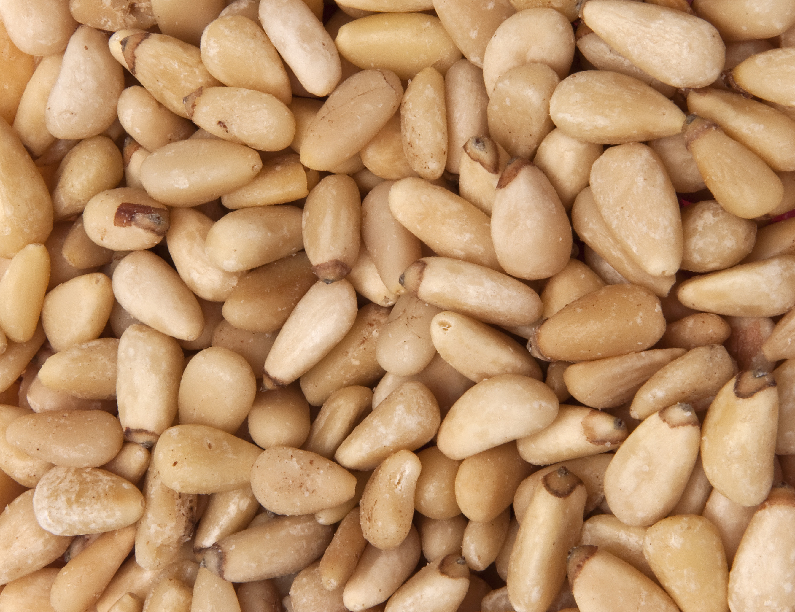 Where can i buy pine nuts